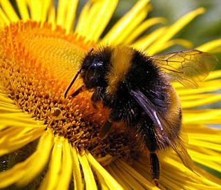 Bumblebeebreath