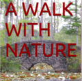 Mindful Nature Walk